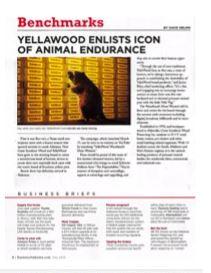 Yellawood Portfolio 1